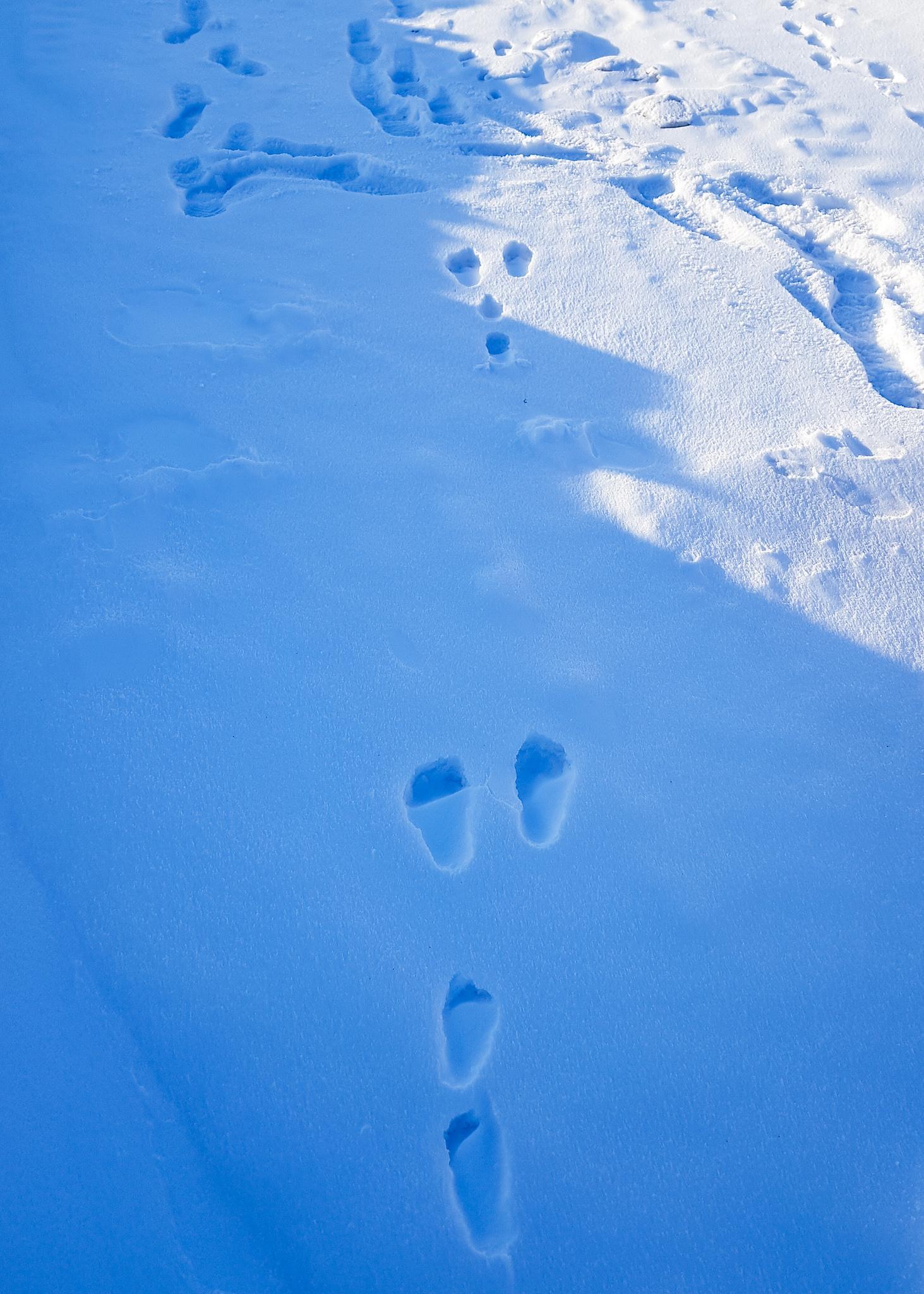 animal footprints in snow
