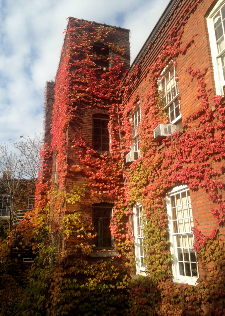building with ivy growth